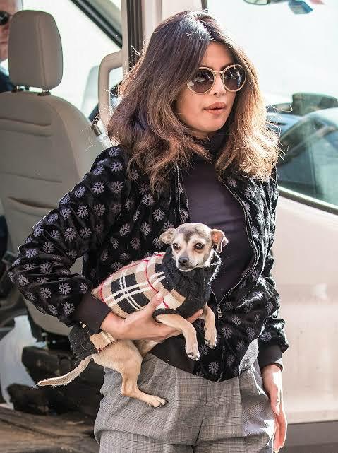 Priyanka Chopra dog