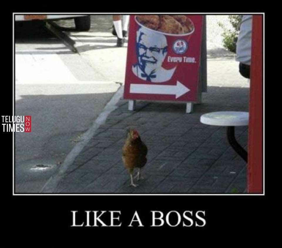 Funny Chicken memes